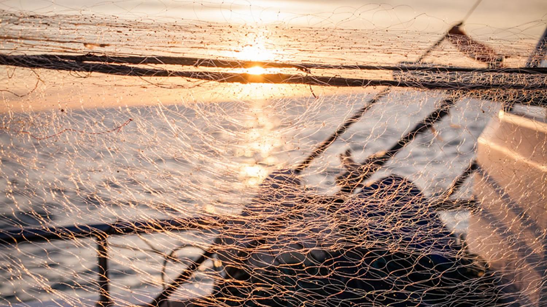 Filet de pêche dans le 06